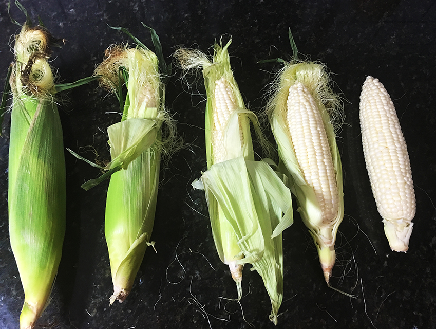 corn-cob-broth-soup_foodmack_16